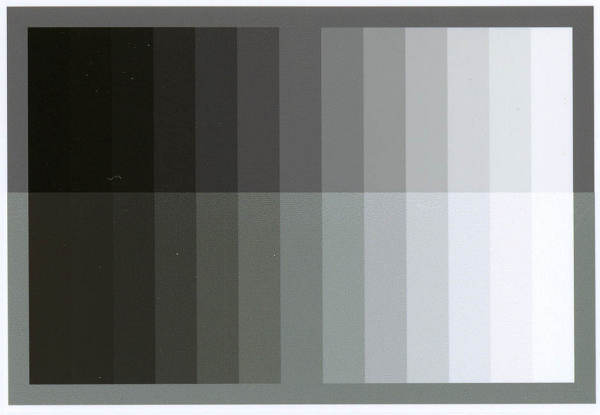 グレー比較m.jpg